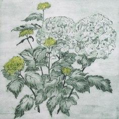 Anthea Stephenson - Hydrangea 2